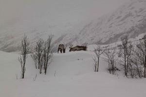Tromso 59